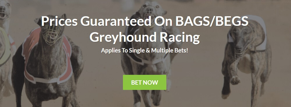 Bruce Betting Greyhound Racing Markets